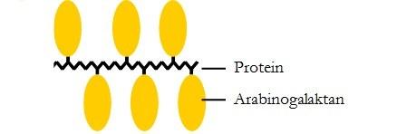 vereinfachtes Strukturmodell für ein Arabinogalaktan-Protein