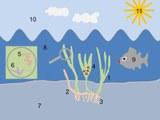 Seagrasses_Figure20R1.jpg
